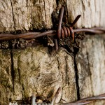 Intrusion Barbed Wire Macro Fine Art Photography Bowling Green KY Cheree Federico Photography