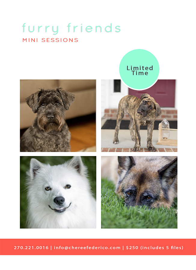 2016 Pet Mini Sessions, Cheree Federico Photography, Bowling Green KY Photographer